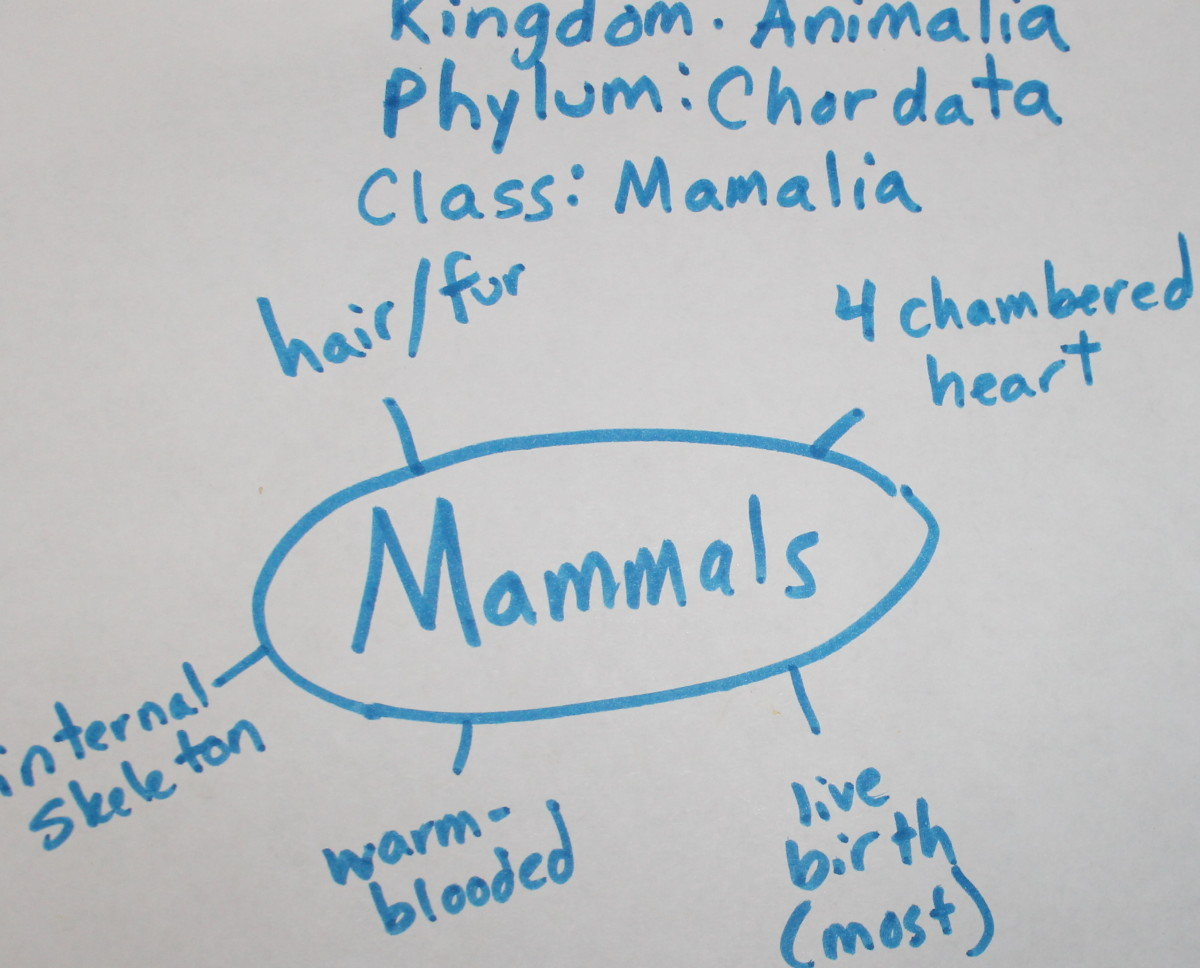Traits of Mammals