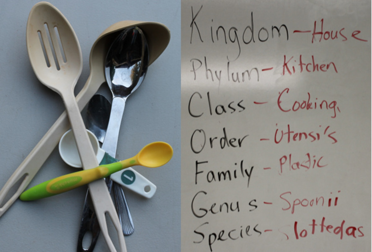 Binomial nomenclature & spoons