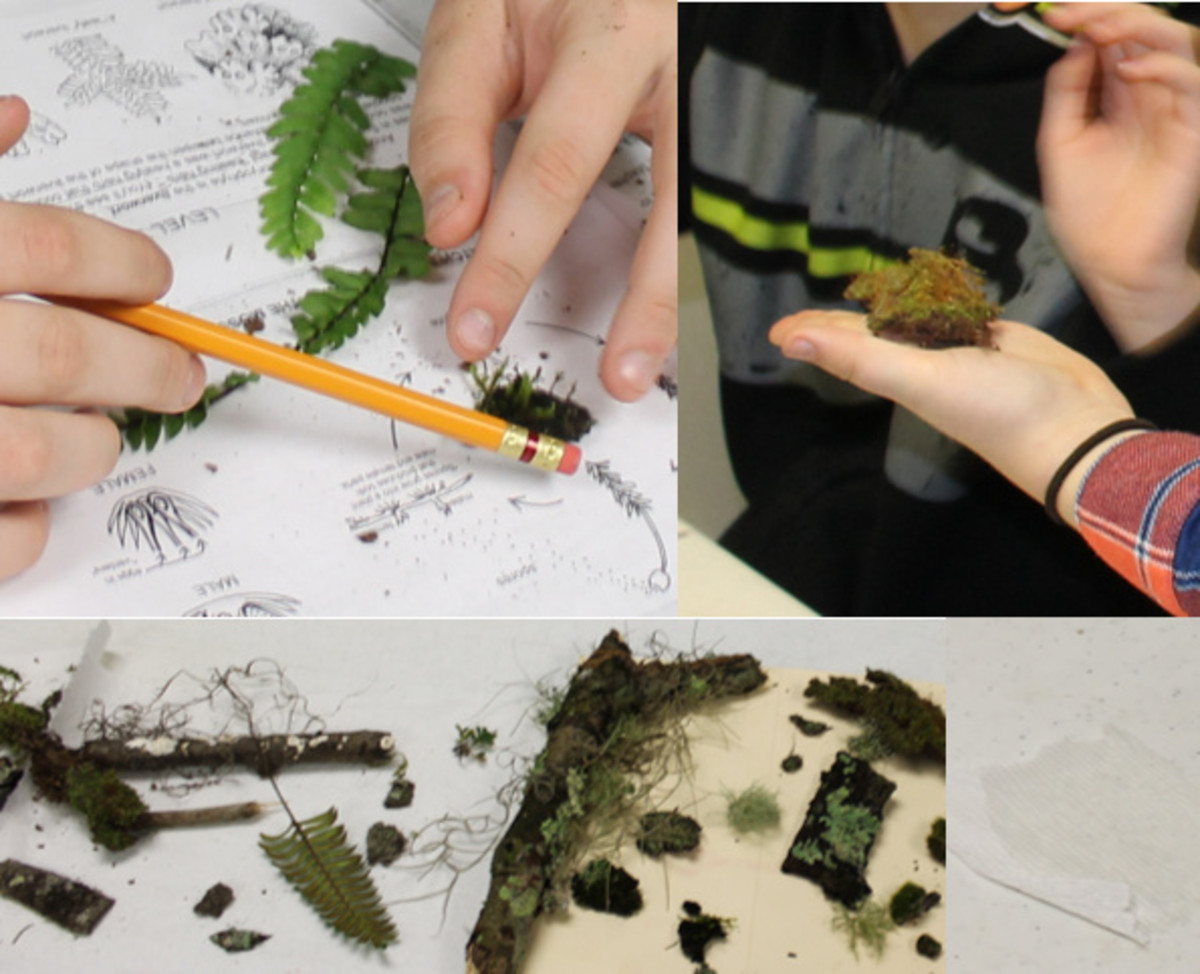 Examining plants that reproduce with spores & watching osmosis take place