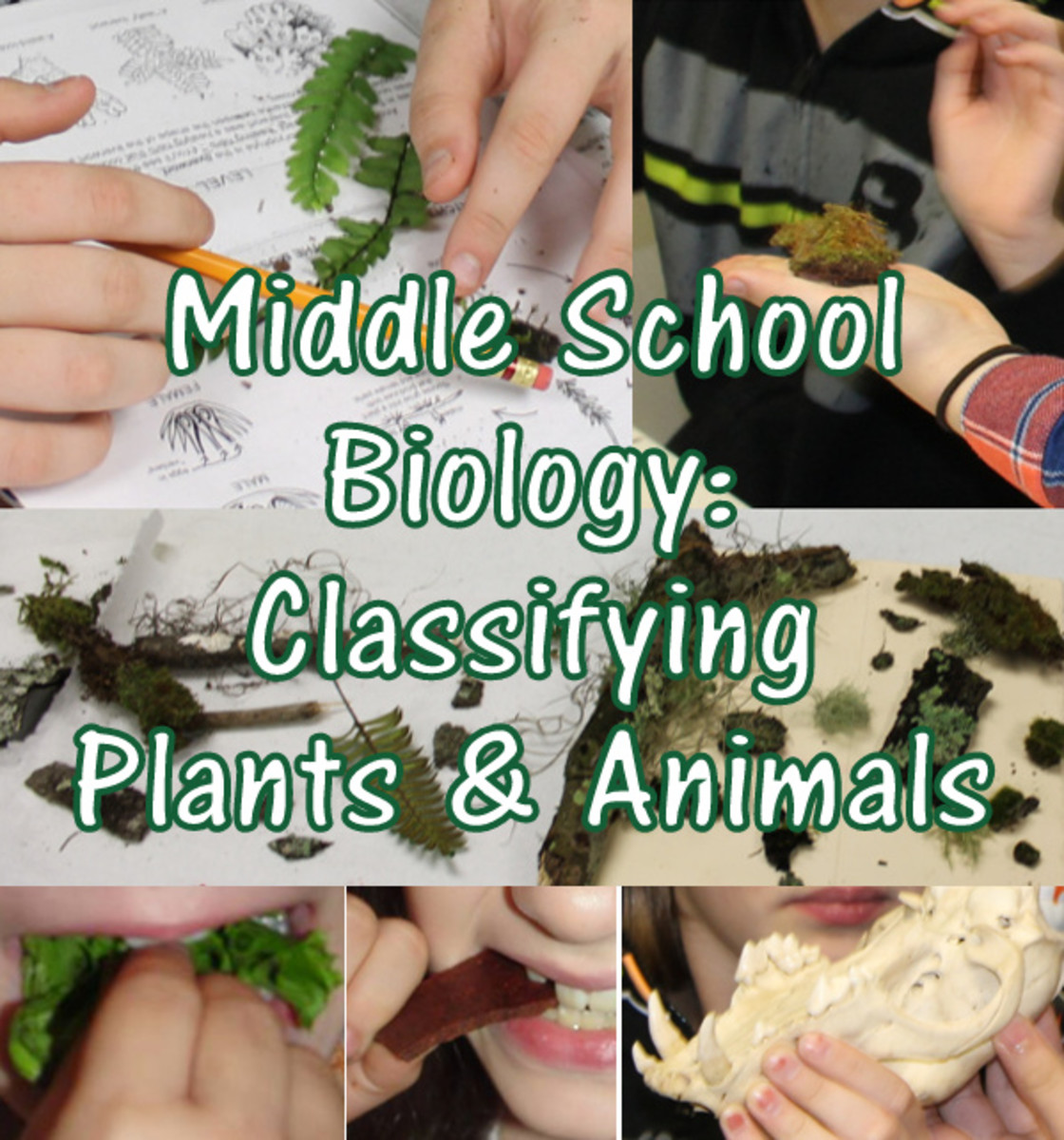 Christian Middle School Biology Lesson: Classifying Plants & Animals