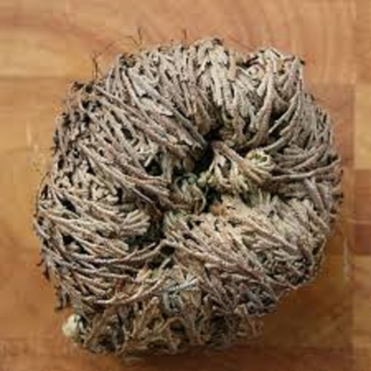lessons-from-the-rose-of-jericho-or-resurrection-plant