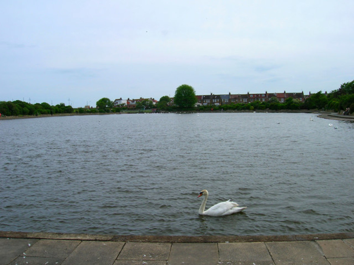 Crumbles Pond, Princes Park.