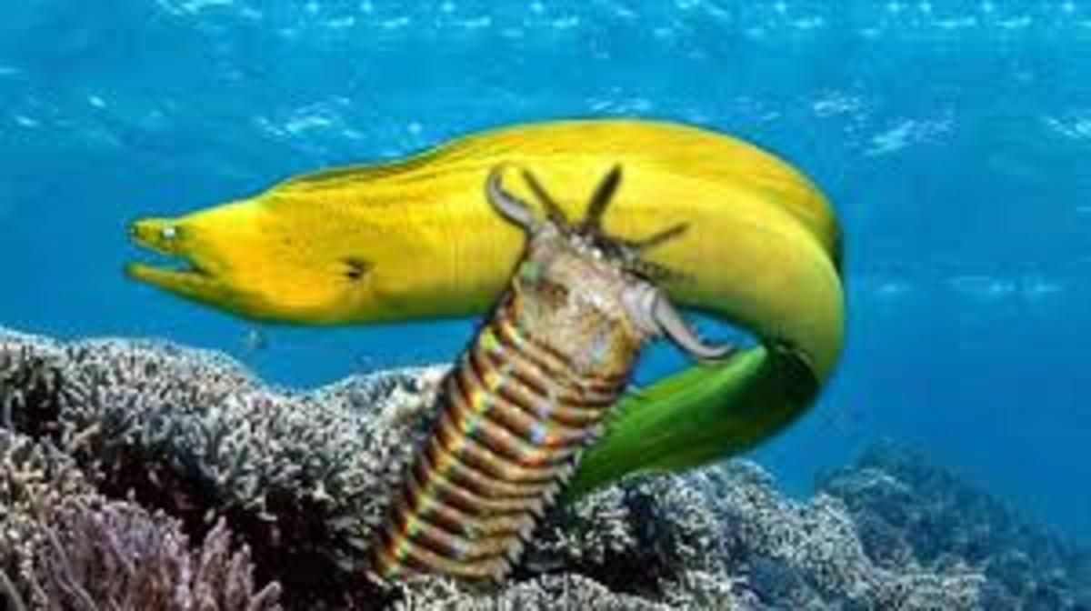 Bobbit Worm about to attack Eel.