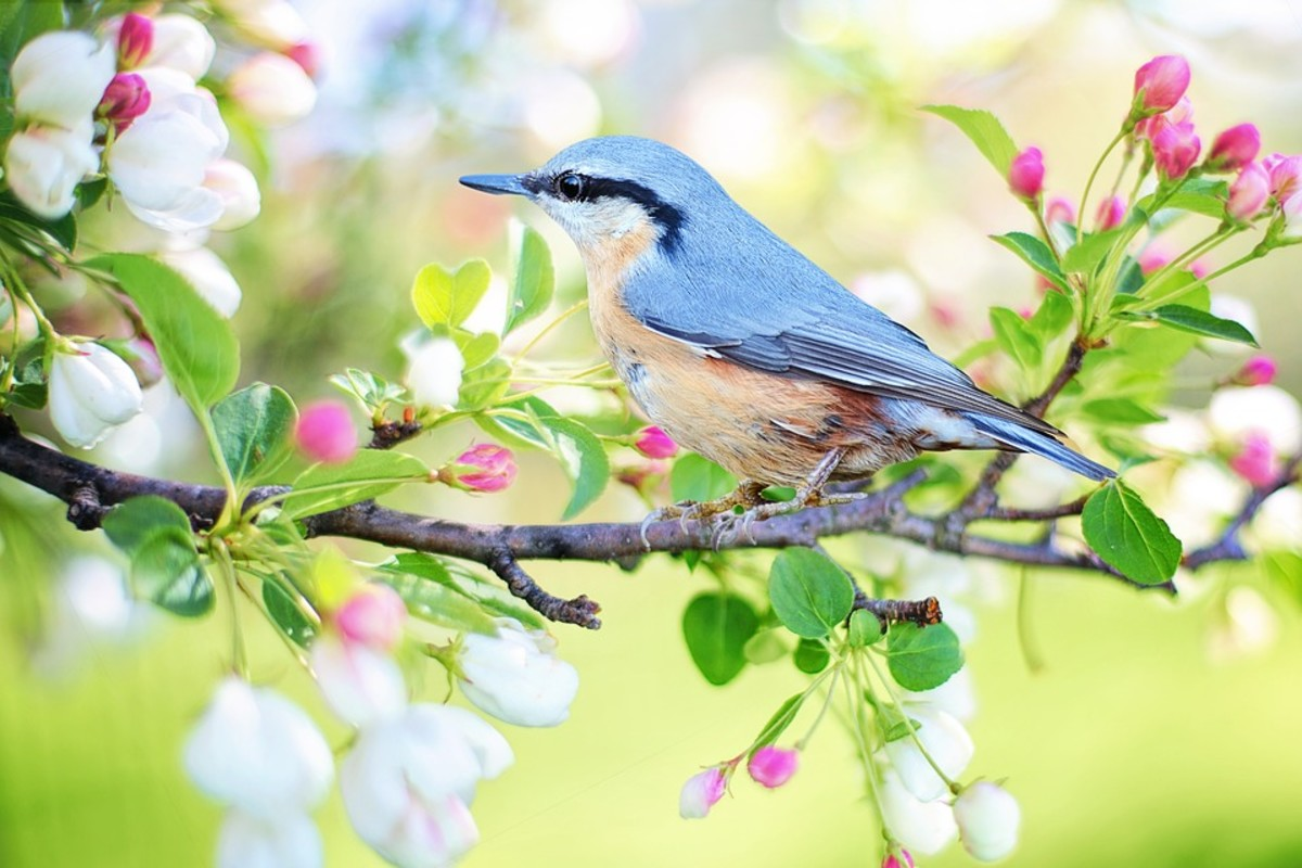A bird and blossoms