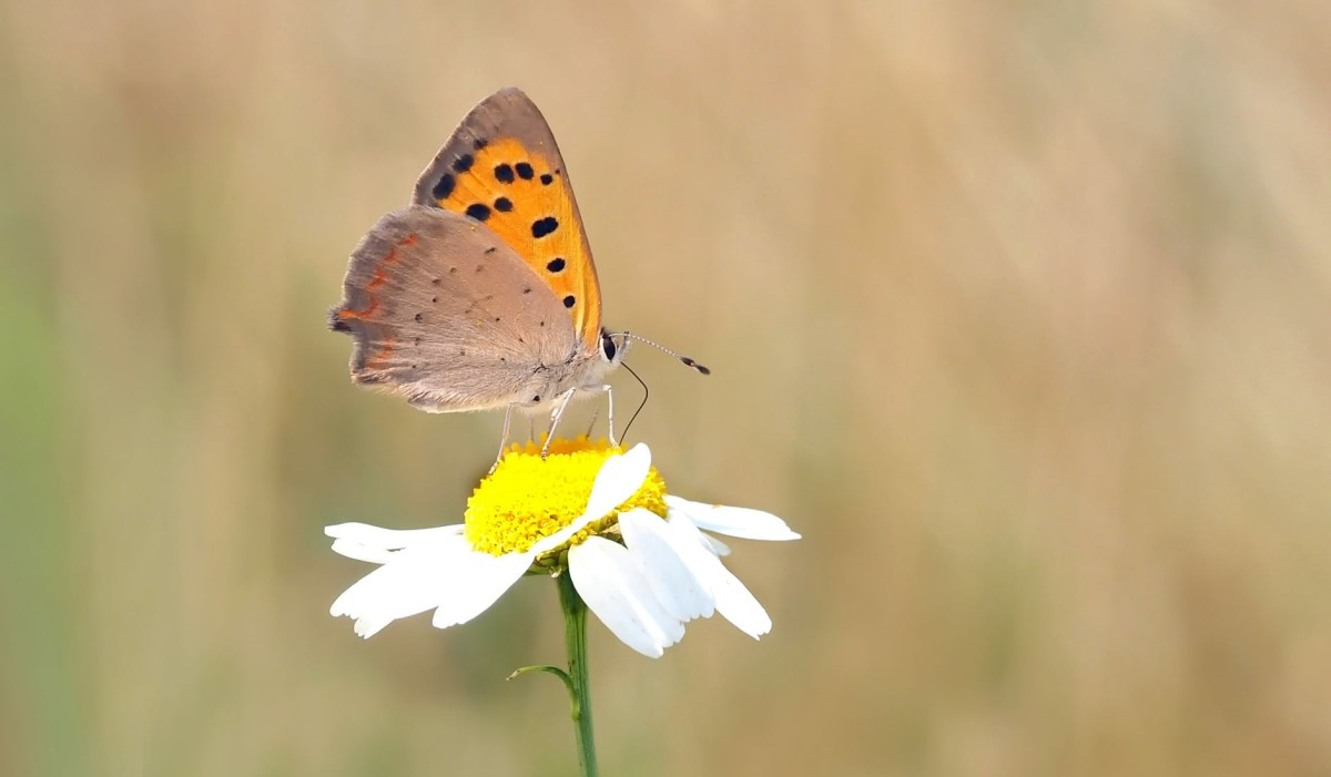 Daisy and the Butterfly