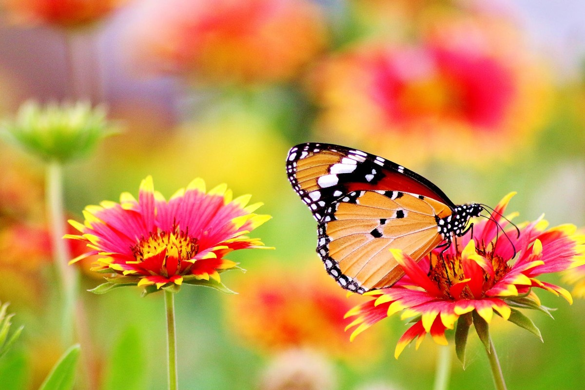 A flower with a butterfly