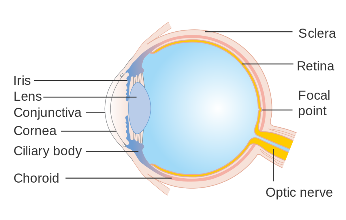 When bacteria enters the eye through the conjunctiva, this will lead to bacterial conjunctivitis..