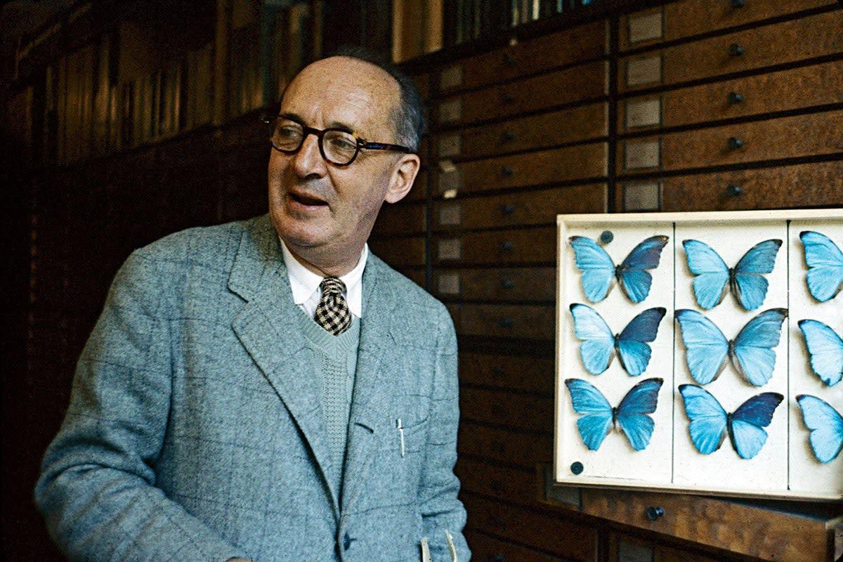 Vladimir Nabokov with his butterflies' drawings