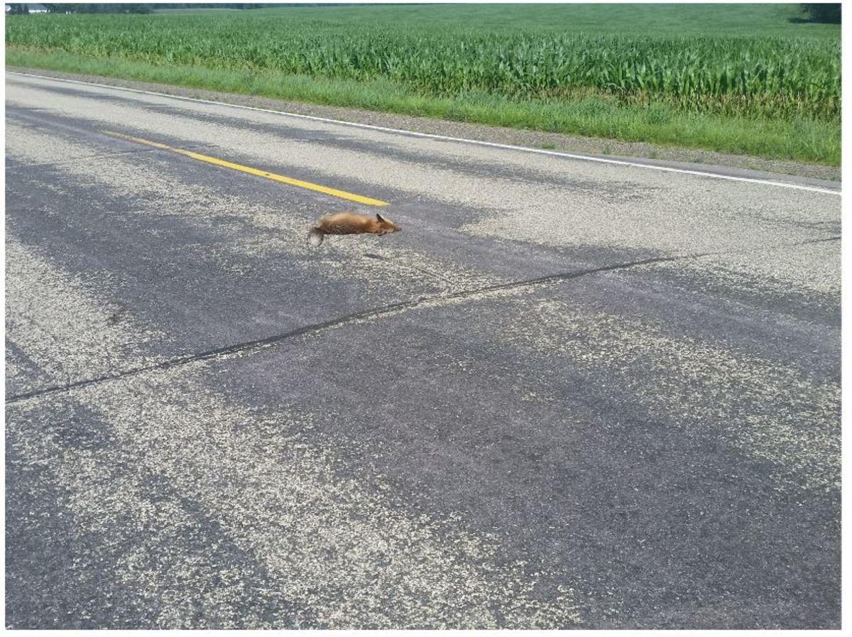 using-road-kill-fur-for-making-fishing-lures