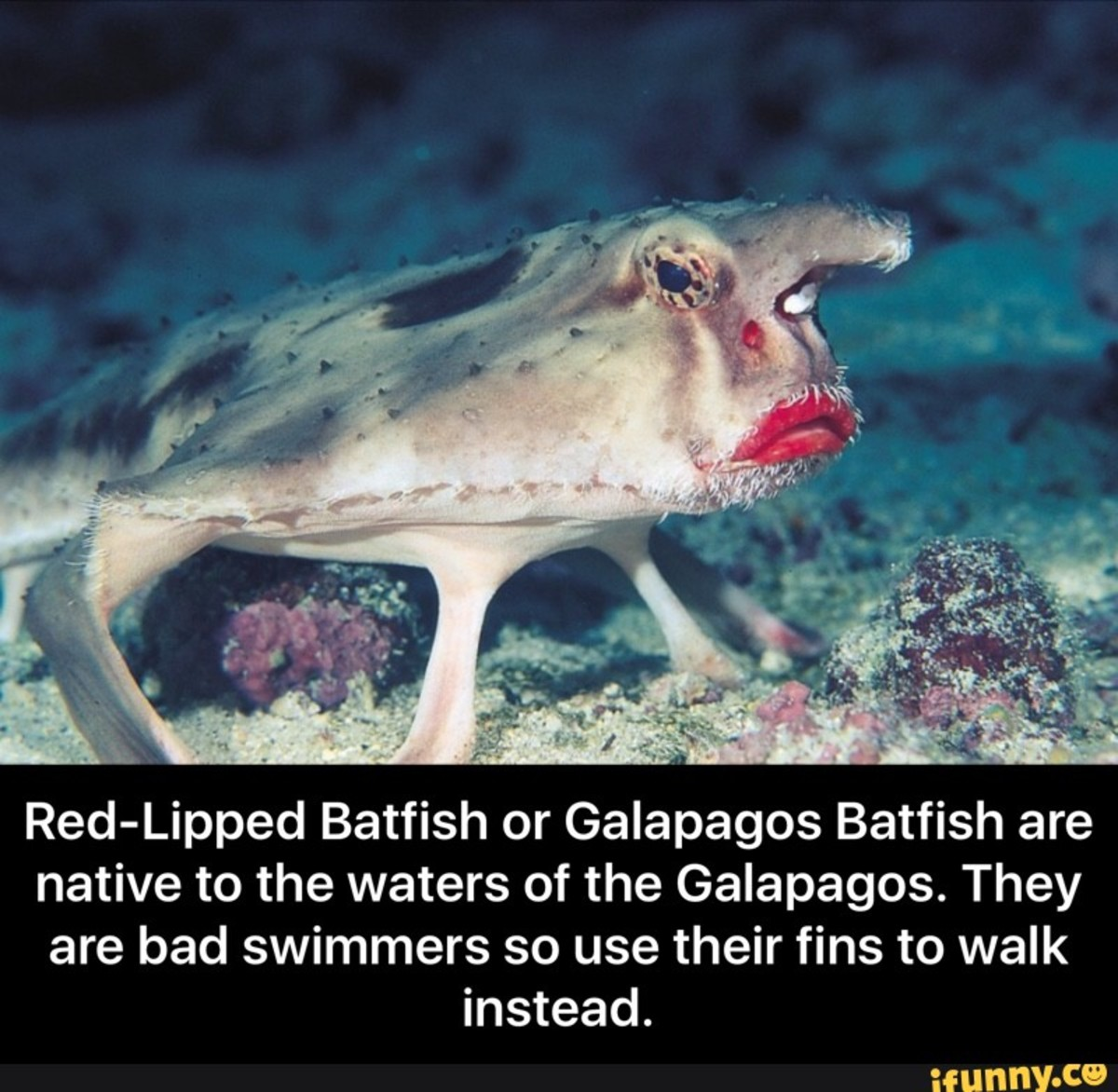 top-10-most-funny-looking-animals-in-the-world
