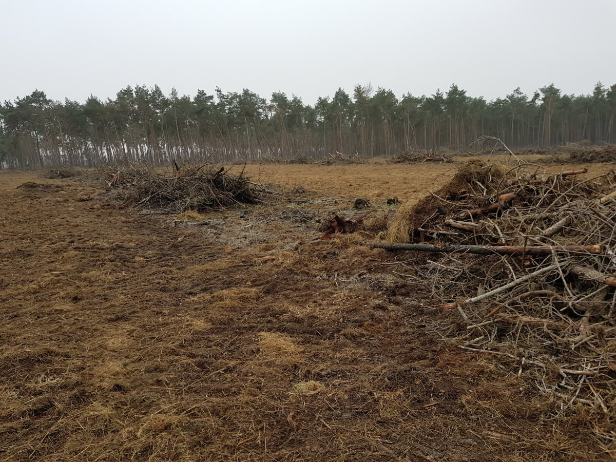 Klaterspeel. This is where the fire destroyed the area. This area will be regenerated.