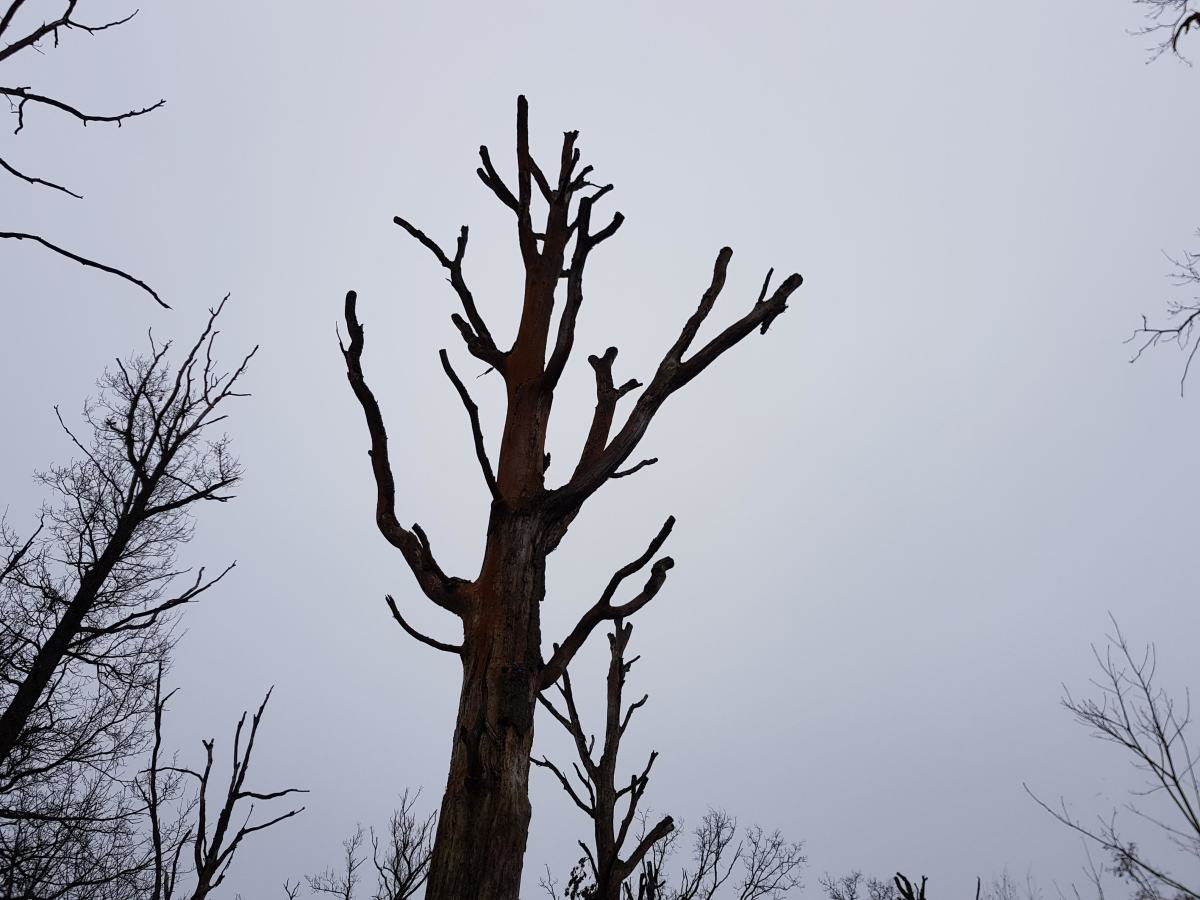 thousands-of-trees-for-maarheeze