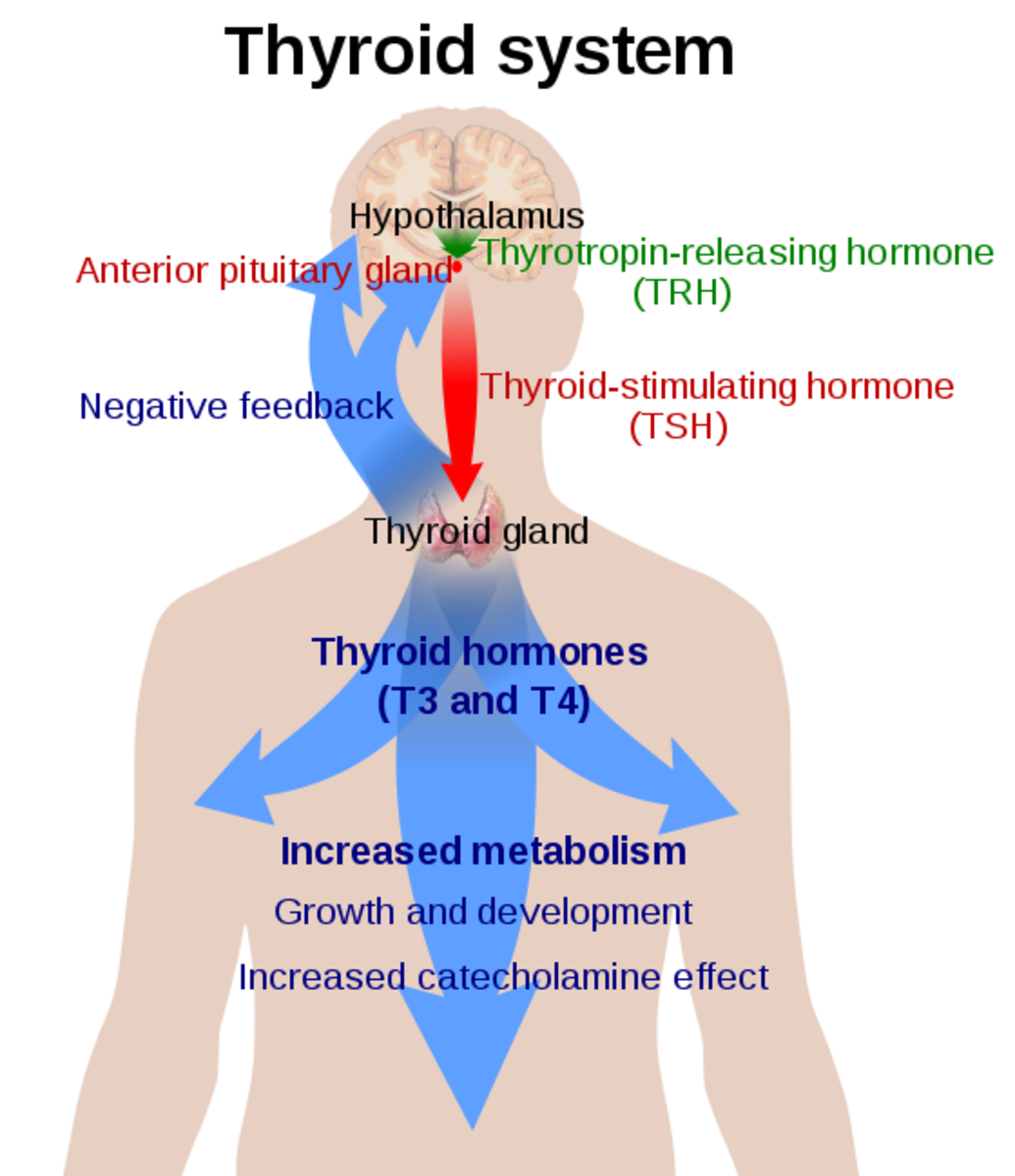 Thyroid Disorders - Symptoms