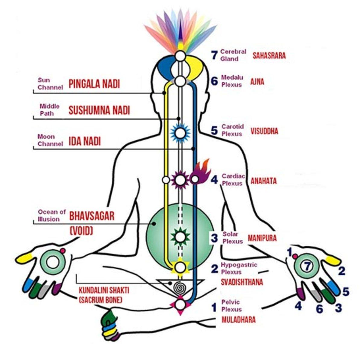 Kundalini energy flow from Mooladhara to Sahasrara through Sushumna Nadi