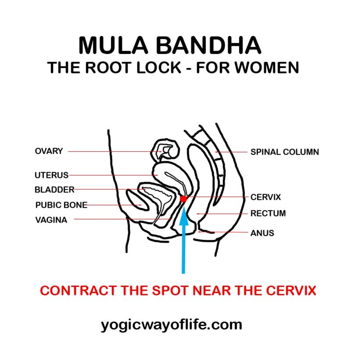 Mula Bandha contraction in women