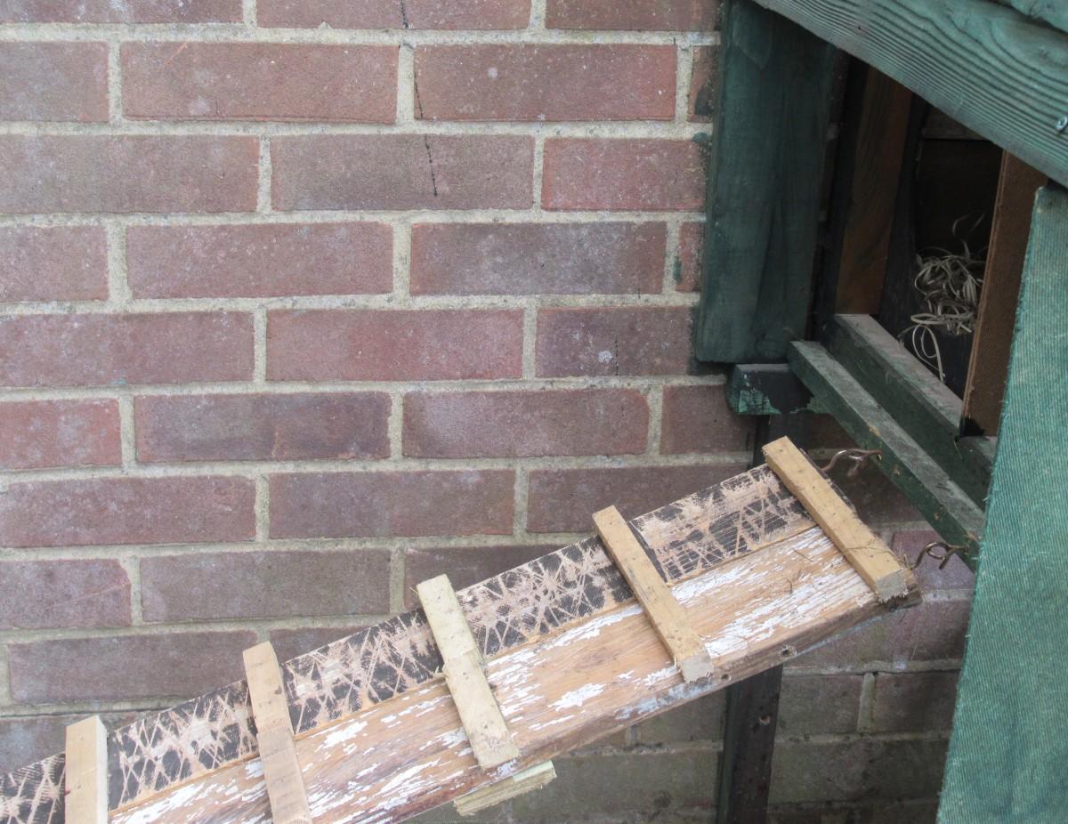 Stairway to Nest Box