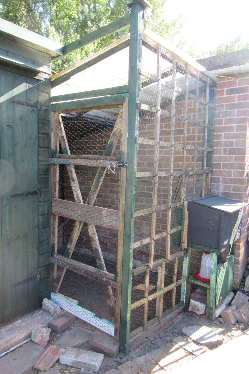 Chickens in Our Garden: Building a Coop, Sourcing Chickens, Looking After Them and Encouraging them to Lay