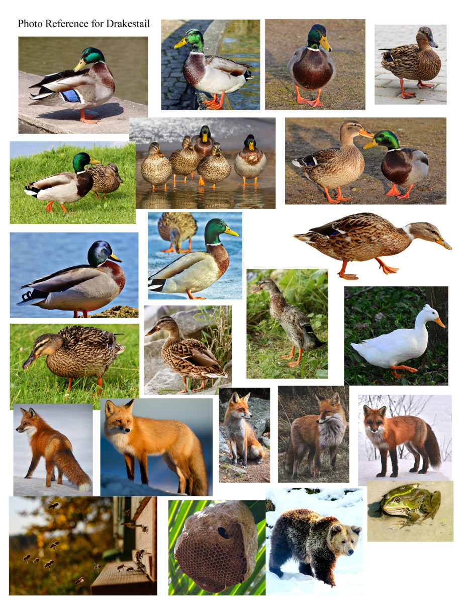 Duck photo references