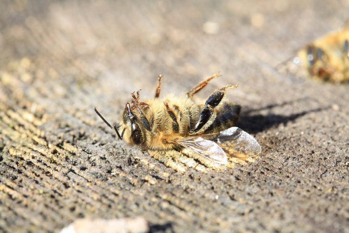 decline-in-the-bee-population-the-cause-and-consequences