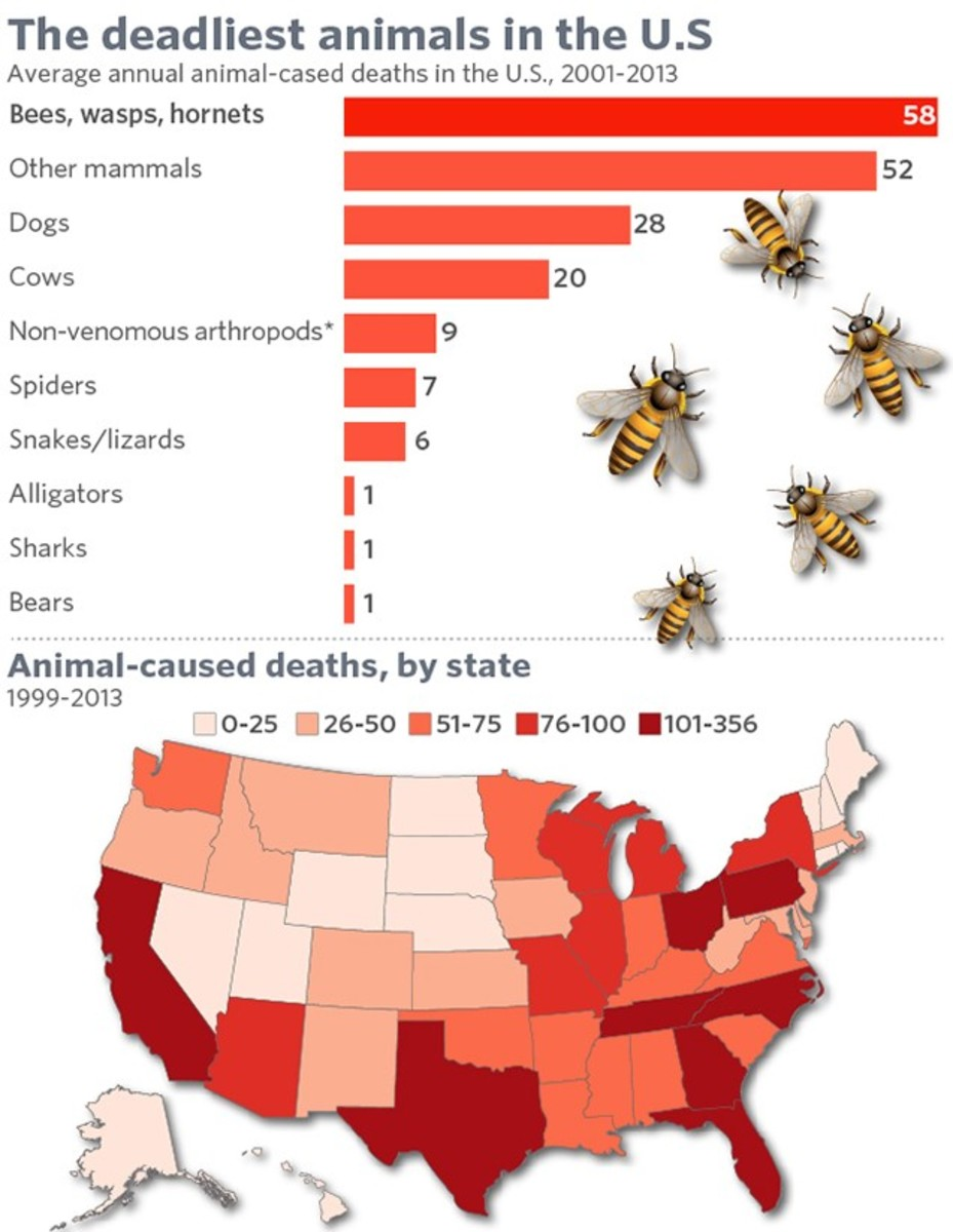 Greatest number of human deaths from a single type of animal in the US goes to the yellow jacket and other wasp/hornet variants. While it is an old statistic, the number is likely higher in the last few years from their rapid increase in population.