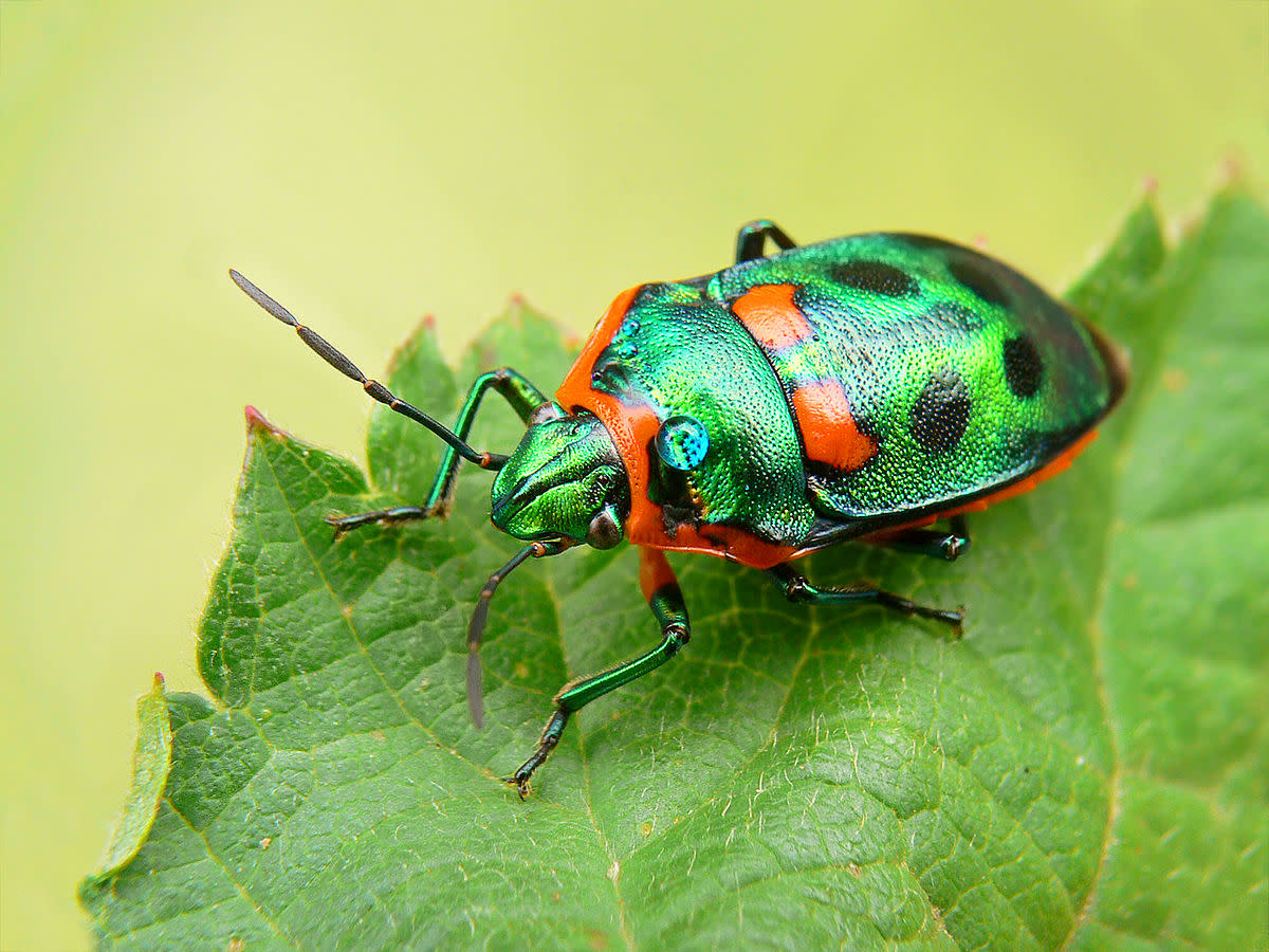 insect-apocalypse-how-the-insect-population-will-change-in-the-next-century