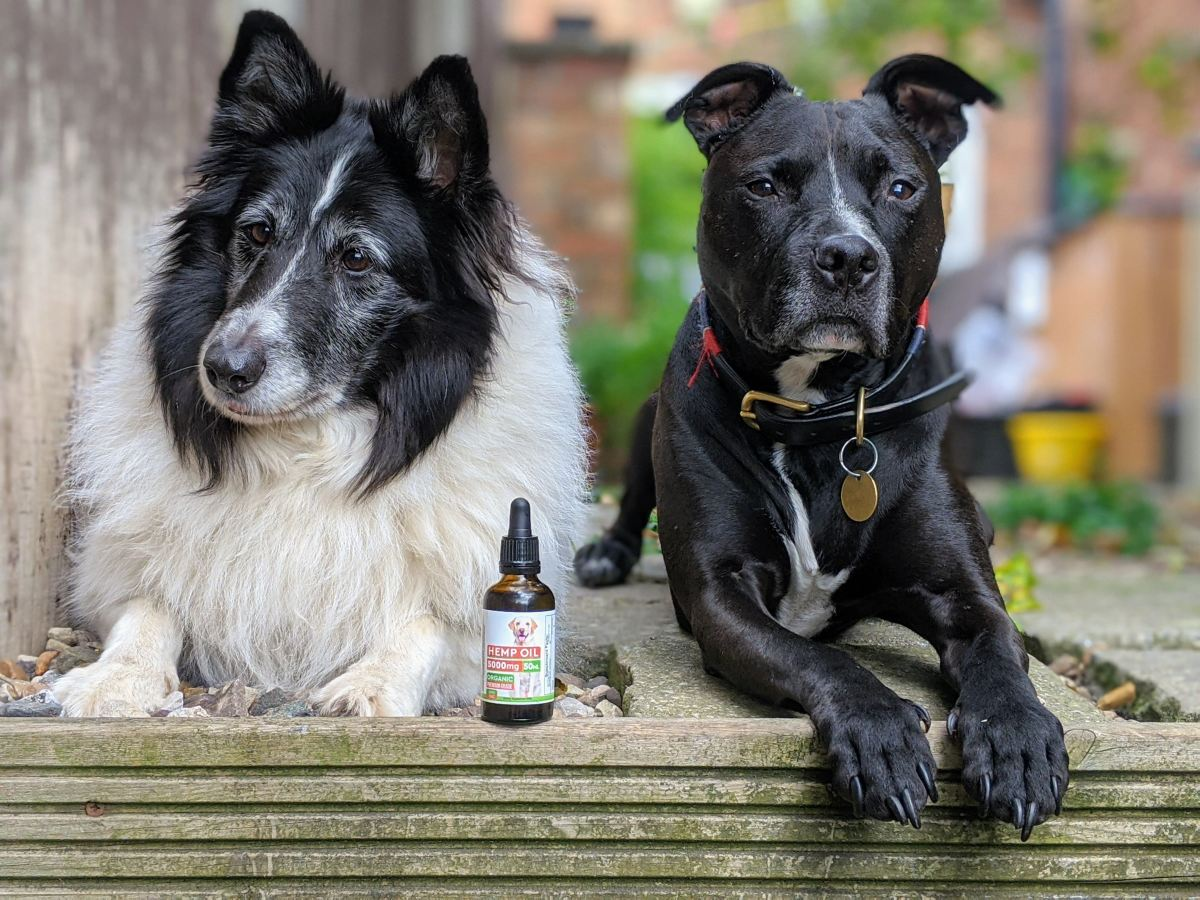 Does Your Dog Struggle With Thunder, Fireworks and Other Loud Noises? Cbd (Hemp) Oil Might Be the Answer.