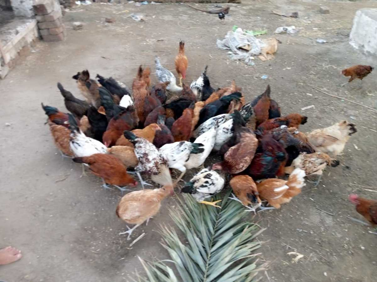 how-to-start-a-poultry-business-with-only-5-dollars