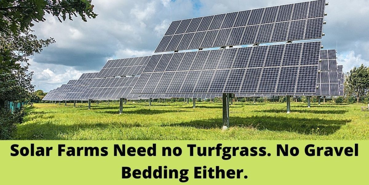 Solar Farms Need No Turfgrass, No Gravel Either, But Only Native Grass!