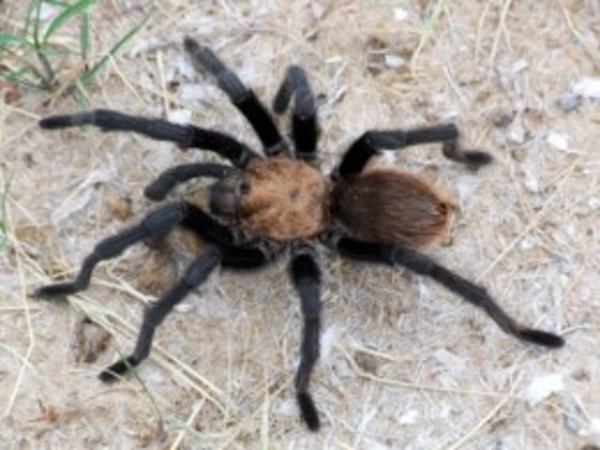 Poisonous & Venomous Spiders, Snakes & Bugs Encountered Whilst On Vacation In Papua New Guinea & Fiji
