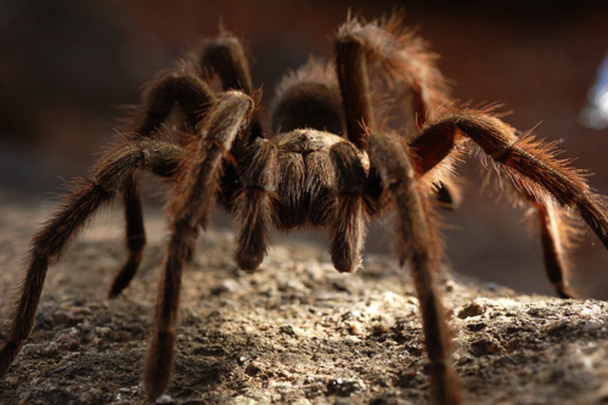 Poisonous & Venomous Spiders, Snakes & Other Insects In The Costa Rica Whilst On Vacation