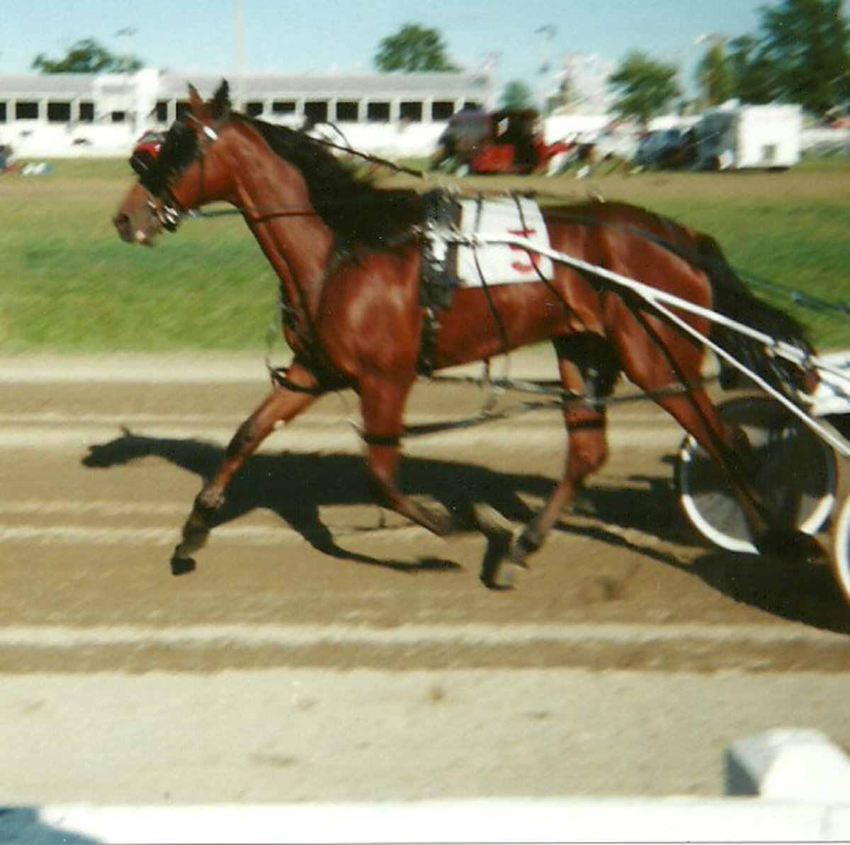Equipment of the Standardbred Harness Racing Horse
