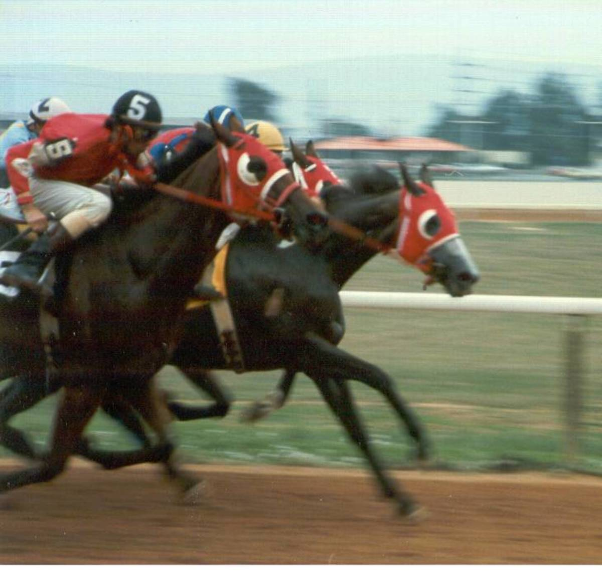 rerun-gives-race-horses-a-second-lease-on-life