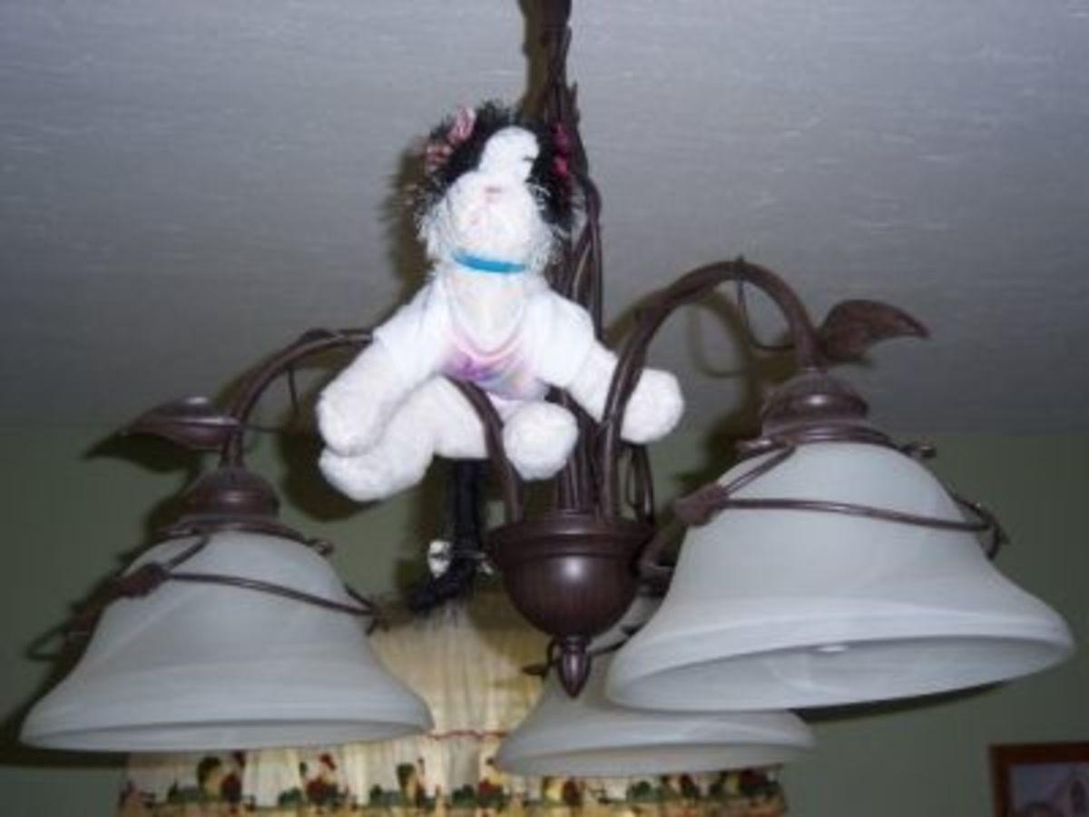 Cat Decorations everywhere - using stuffed animal cats