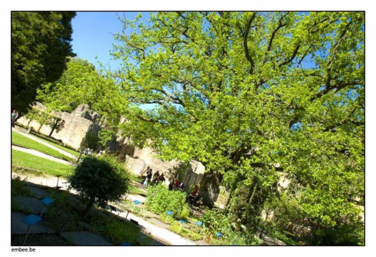 Nostradamus' herb garden