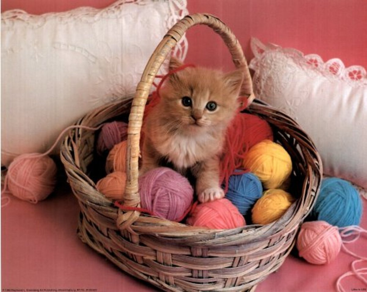 kitten in yarn basket photo print