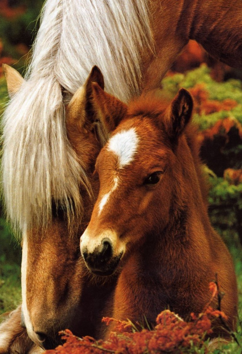 Mother and foal poster