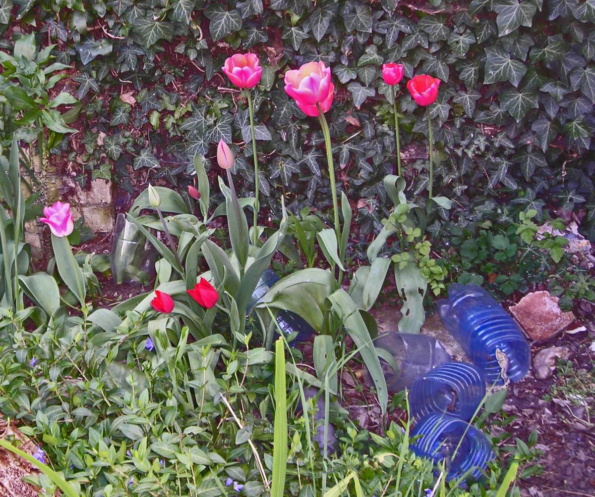 gardening-disasters