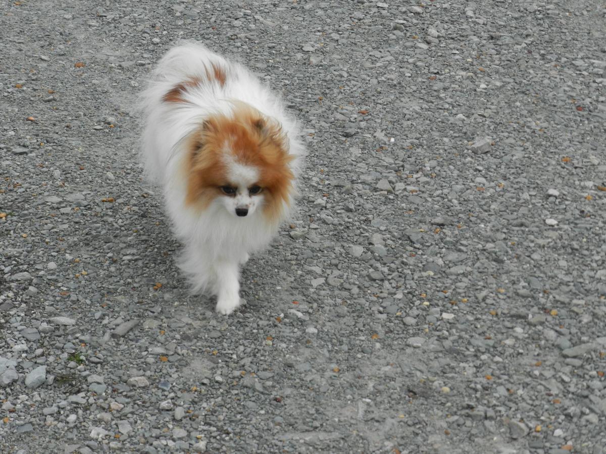 Walking Cute Dogs is Fun
