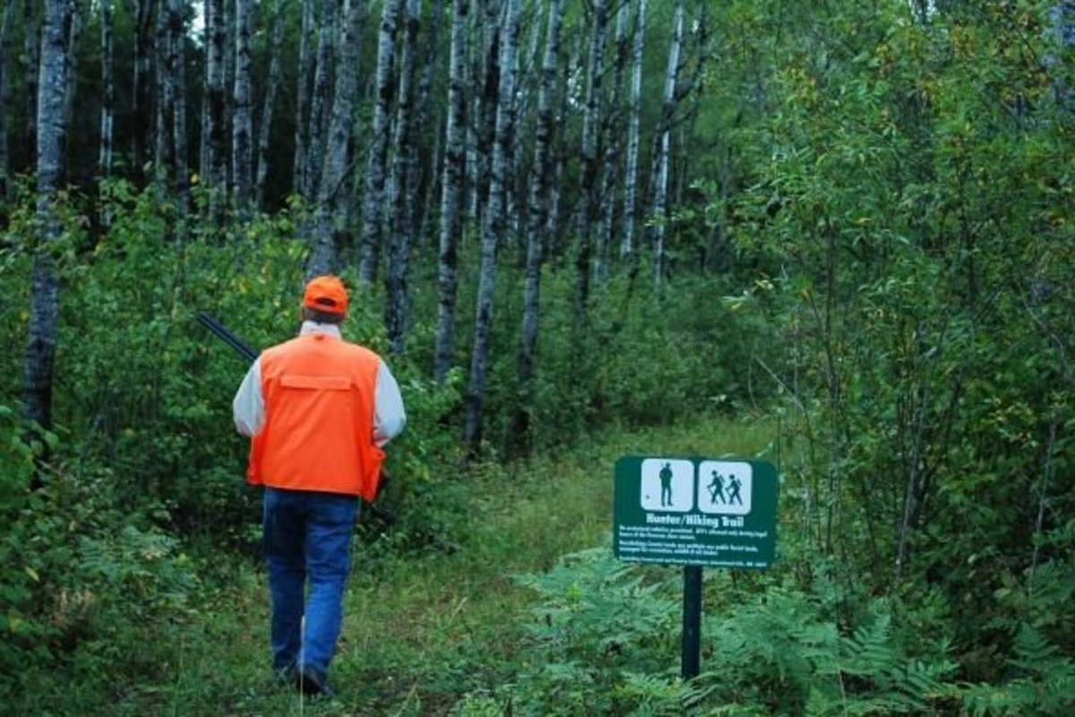 Hunter walking trails in Koochiching County, Minnesota.
