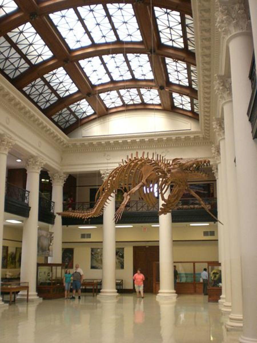 Main atrium of the Alabama Natural History Museum at the University of Alabama.