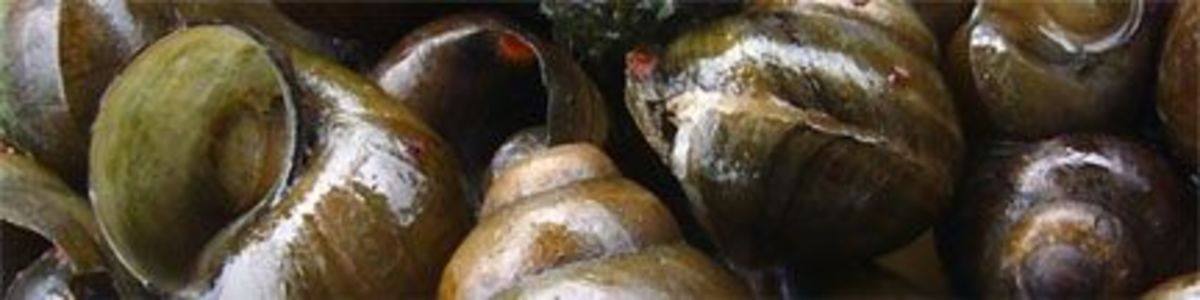 cooked-snails
