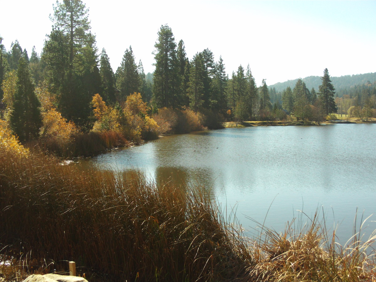 There are many beautiful trees and ducks to be spotted on a walk to Grass Valley Lake.