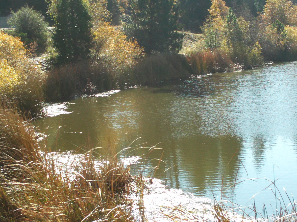 The north east corner of Grass Valley Lake.