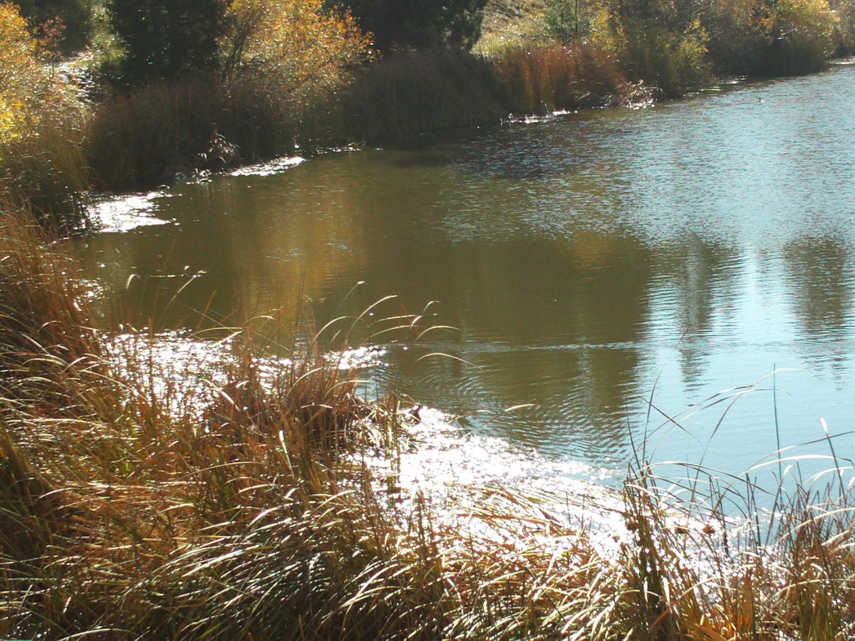 The reeds and the ducks are what make Grass Valley Lake serene.