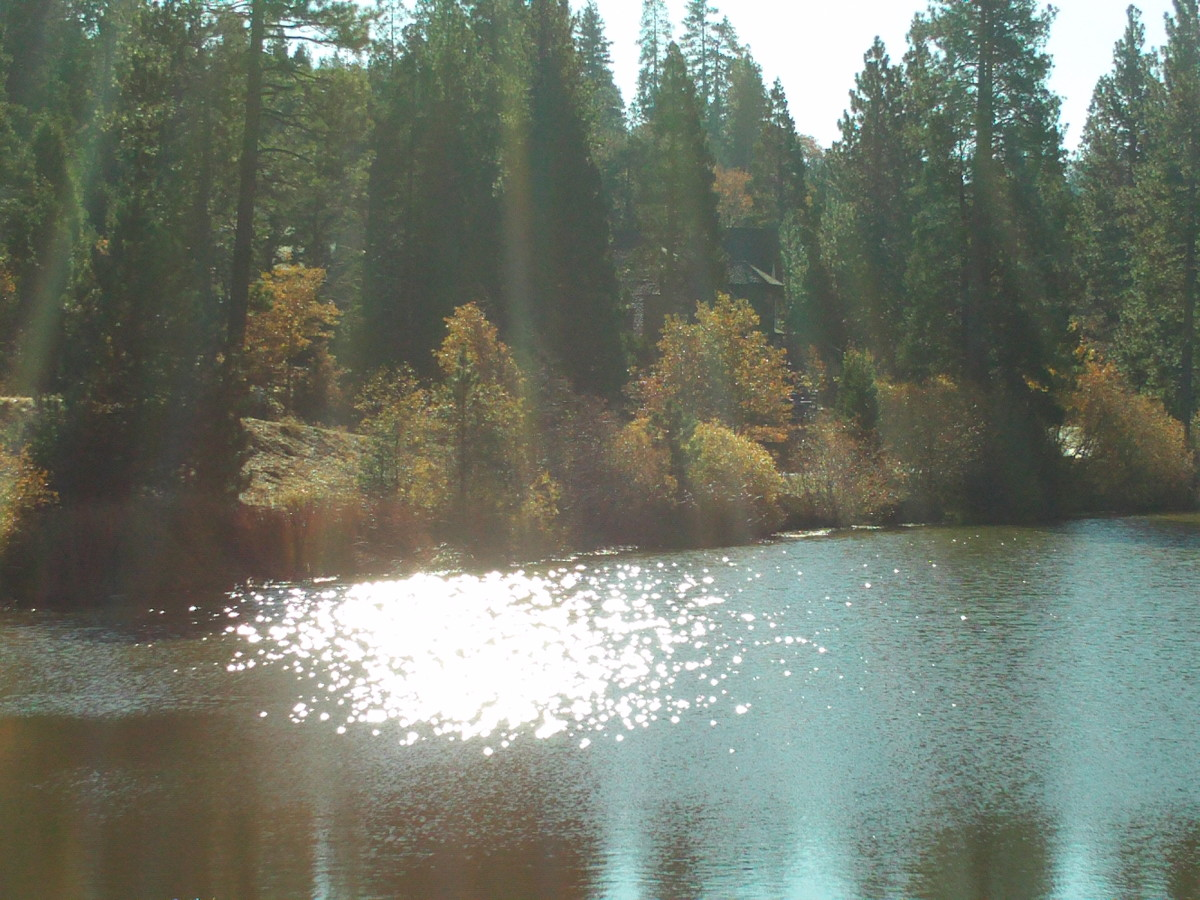 Pine and oak trees all around Grass Valley Lake.