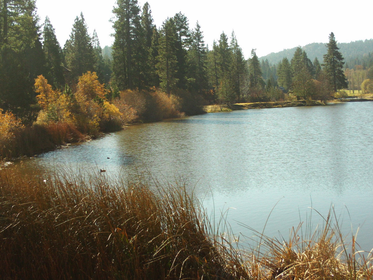 Grass Valley Lake with reeds near the shore.