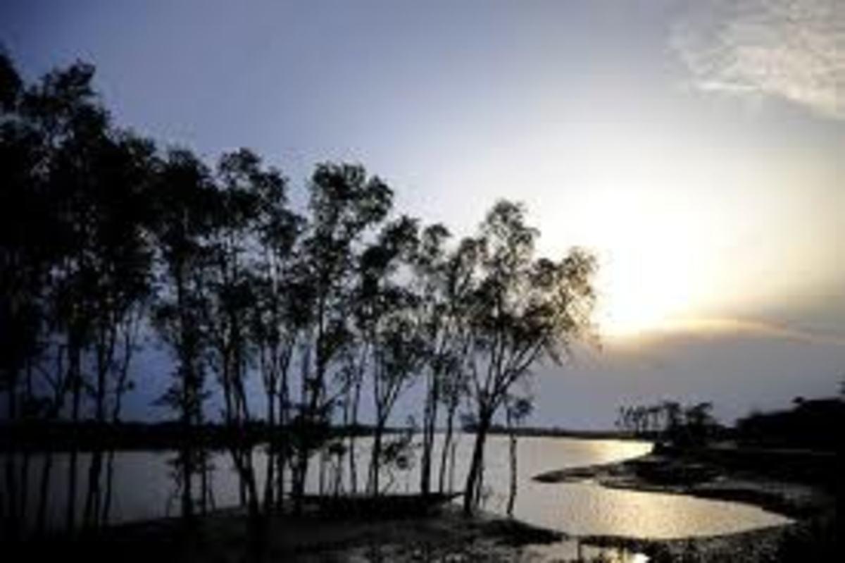 Sunderbans Scenic Delta