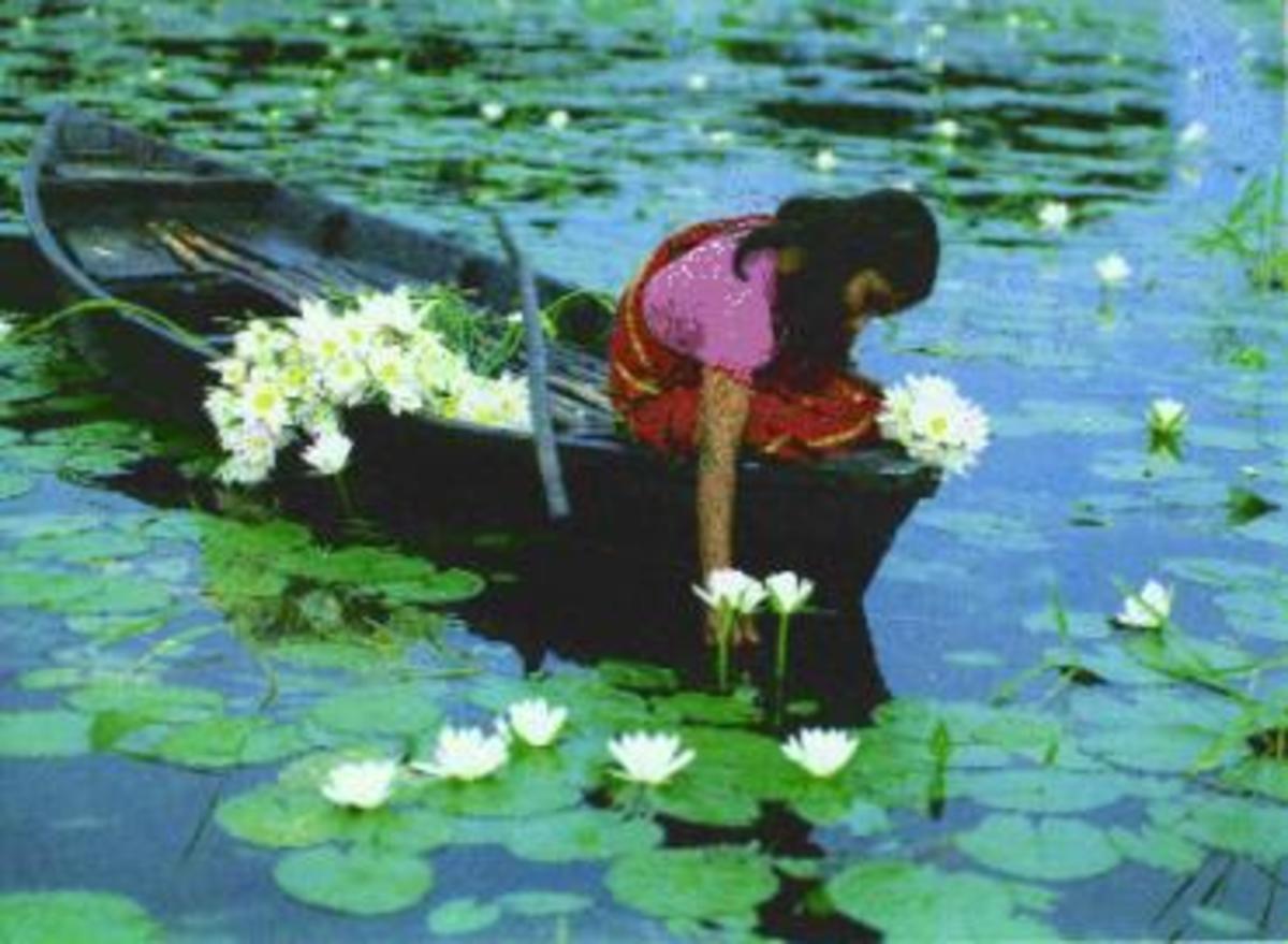 A Bangladeshi Girl