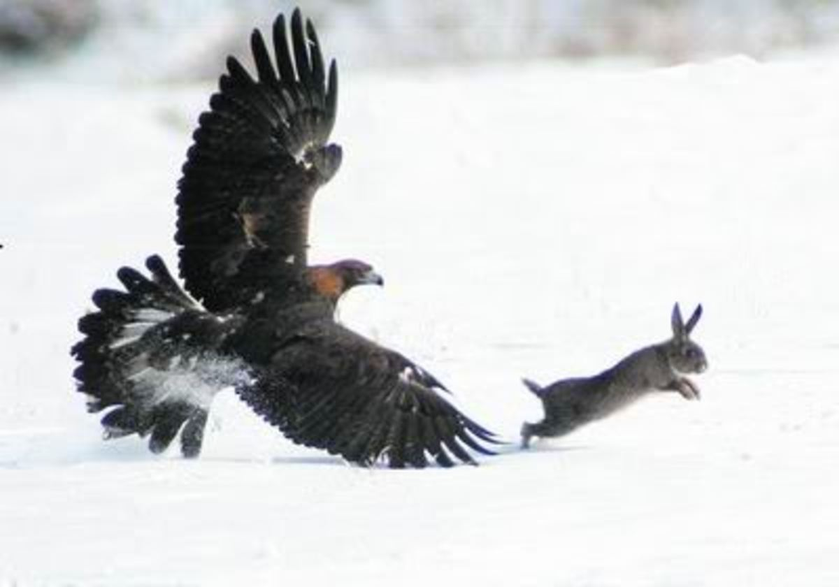 Protecting your pets from birds of prey