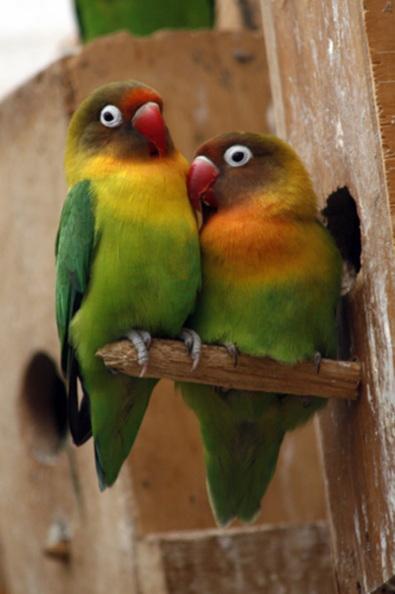 Love Poem of Birds
